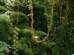 Afbeeldingsresultaat voor regenwoud