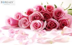 Organic Pink Roses!