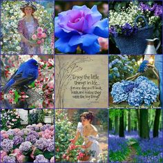 Collage by Miss Lily Bliss Beautiful Collage, Beautiful Flowers, Collages, Mood Colors, Color Collage, Blue Garden, Color Harmony, All Nature, Colour Board