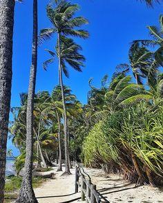 """""""Ils ont essayé de nous enterrer. Ils ne savaient pas que nous étions des graines."""" Proverbe mexicain  #life#choice#lifestyle#spirit#motivation#light#peace#beach#sea#sky#seaside#sealovers#seascape#landscape#nature#naturelovers#colors#tree#caribbean#island#beautiful#quote#quotes#travel#travelgram#travelling#picoftheday"""