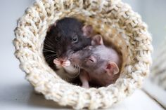 {cozy rodents} ultimate cute n cozy!
