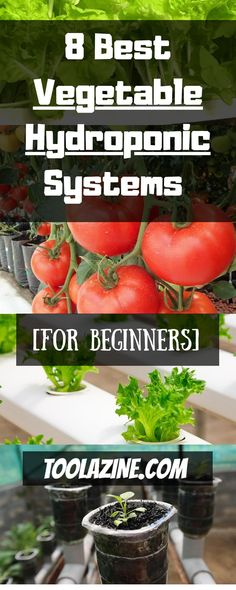 8 Best Vegetable Hydroponic Systems For Beginners. How to build easy DIY hydroponics vegetable gardening systems for indoor or outdoor. Ebb and flow hydro and more. gardening diy 8 Best Vegetable Hydroponic Systems For Beginners Hydroponic Vegetables, Hydroponic Farming, Hydroponic Growing, Hydroponic Plants, Container Gardening Vegetables, Hydroponics System, Growing Vegetables, Vegetable Gardening, Ebb And Flow Hydroponics