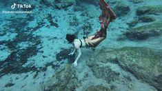 Mermaid Gifs, Mermaid Song, Mermaid Images, Mermaid Pictures, Mermaid Videos, Real Life Mermaids, Mako Mermaids, Fantasy Creatures, Mythical Creatures