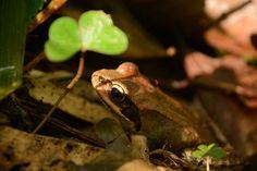 【これからの季節はブナ林がアツい】 | 奥尻島で感動体験ができる宿-imacoco Animals, Animales, Animaux, Animal, Animais