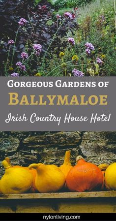 the organic gardens at Ballymaloe Country House Hotel, a member of Ireland's Blue Book