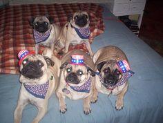 4th of july pugs
