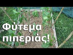Companion Planting, Garden, Plants, Youtube, Fitness, Garten, Lawn And Garden, Gardens, Plant
