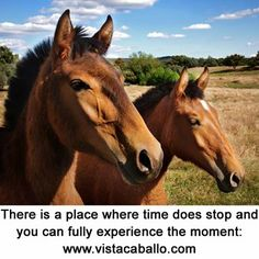 There is a place #executives #curiosity #CEOmentoring  #horses #selfdiscovery #courage #PersonalEvolution