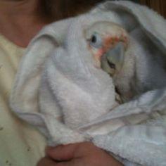 I had a bath!