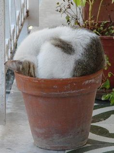 Potted Cat <3