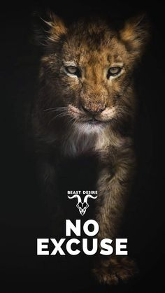 Motivational Quotes Wallpaper, Best Motivational Quotes, Wallpaper Quotes, Inspirational Quotes, Lion Quotes, Animal Quotes, Wolf Qoutes, Beast Mode Quotes, Lion Wallpaper
