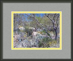 Desert Beauty Framed Print By Stephanie Forrer-harbridge