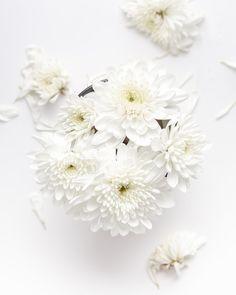 white petaled flower on white background White Flower Pictures, White Flowers, Flower Photos, White Dahlias, Floral Flowers, Flower Vases, Berlin Live, 3d Alphabet, Raining Outside