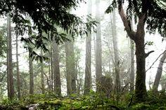 Goldstream park, Vancouver Island, Canada