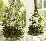 live ivy bird cage