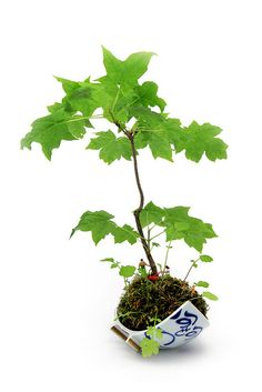 Bonsai #bonsai, #hobbies, https://apps.facebook.com/yangutu