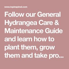 Follow our General Hydrangea Care & Maintenance Guide and learnhow to plant them, grow them and take proper care for them.