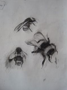 sketches of bees   Vermeer and Bridget Riley, drypoint progress and Bumble bee drawings.
