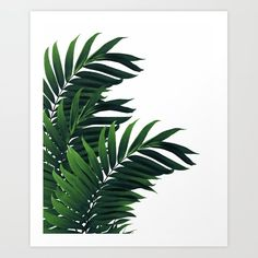 """Palm Leaves Tropical Green Vibes "" Art Prints by anitabellajantz Tropical Home Decor, Tropical Interior, Tropical Vibes, Tropical Houses, Tropical Furniture, Framed Prints, Canvas Prints, Art Prints, Plant Wallpaper"