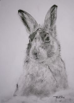 (SOLD) #48 Mountain Hare - inspiring project and beautiful drawings by artist Trevor Jones. Bunny Rabbit