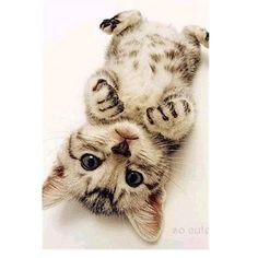 #kitty #kittykat #lovecat #catliver #cuddlecat #adorablecat #cutecat #cutecats #lovecats #kittykatlover #cats #catlover #cat #lovecat #babykitty #babycat #adorablecats