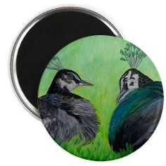 PEACOCK LOVE Magnets