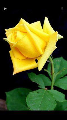 Rose World - Comunidade - Google+