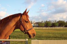 Preventing parasite infestation is crucial to maintaining your horse's health. If left untreated, a high parasite load can cause symptoms including poor quality coat, weight loss, diarrhea or colic. Here are 5 things every owner should (or shouldn't) do. Please repin to share!