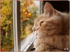 The perfect Cat Relax Autumn Animated GIF for your conversation. Discover and Share the best GIFs on Tenor. I Love Cats, Cute Cats, Funny Cats, Animation, Mundo Gif, Relaxing Gif, Gifs, Autumn Scenes, Gif Animé
