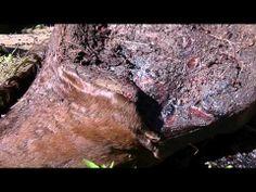 ▶ Miami thoroughbred kill - YouTube