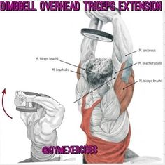 Dimbbell overhead triceps extension Biceps, Extensions, Exercise, Fitness, Ejercicio, Excercise, Work Outs, Workout, Hair Extensions