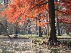 Botanic Garden of the University of Szeged, Hungary. I miss it so much!