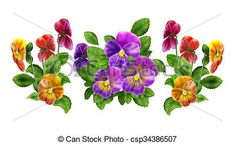 Pansy viola isolated on white. Pansy floral pattern, three... stock illustration - Search Clipart, Drawings and Vector EPS Graphics Images - csp34386507