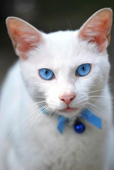 """.......FOR SHORT, WE CALL HER: """"MISS BLUE EYES"""".......SHE'S HEAVEN SENT........ccp"""