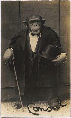 anunnaturalhistory:    Consul the Chimpanzee, c. early 1900's