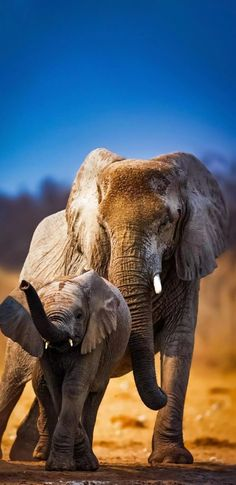 Elephant Love, Elephant Art, African Elephant, Wild Animals Photography, Elephant Photography, Photography Tips, National Geographic Animals, Baby Animals, Cute Animals