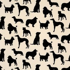 For all dog lovers this is a great wallpaper from Osborne & Little: F5861/01