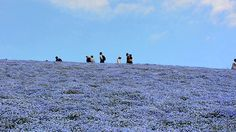 A Day At Hitachi Seaside Park
