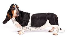 Healthy Pets, Pet Shop, Dogs, Animals, Collection, People, Pet Store, Animales, Animaux