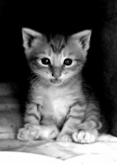 Cat named BooBoo  Cat photography  Cat lovers  by KatsPhotographs, $10.00