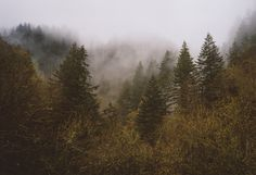 Charlie Swan, Between Two Worlds, Twilight Pictures, Twin Peaks, New Moon, Twilight Saga, Nature Photography, The Outsiders, Scenery