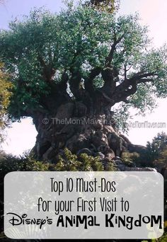 Top 10 Must-Dos at Animal Kingdom