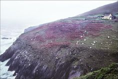 Cliff House by padams, via Flickr