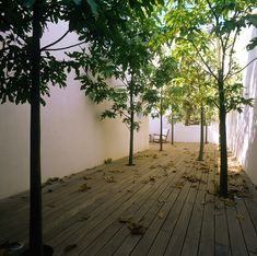 'House in Savion' by Alex Meitlis, Savion, Israel.  This would be an awesome room. If the trees stayed the same size..