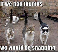 Cool cats---from West Side Story? Gangs and snapping. Cool Cats, I Love Cats, Crazy Cats, Bad Cats, Funny Kitties, Funny Cat Pictures, Funny Photos, Animal Pictures, Funny Animals