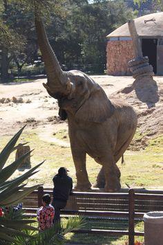 South Africa - Johannesburg Zoo
