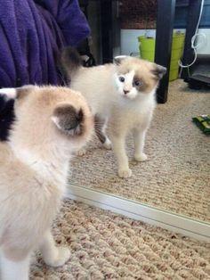 dia de gato
