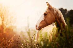 Pferde sind schon sehr beeindruckende Tiere. Mehr zu den Sinnen der Pferde in unserem Magazin!