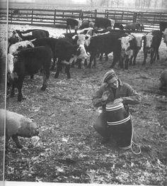 UMA FESTA ANIMAL - Continuamos com JD em suas performances musicais...com um público prestigiado e que achou bem interessante um almoço com músicas de atabaque..só o porquinho que para variar com seu espírito de porco achou que JD desafinou em algumas partes, mas as vaquinhas adoraram, mesmo tendo uma prima distante forrando o instrumento de percussão. pois a folga que era boa se acabou..carnaval agora só em 2013 isso se o mundo não acabar antes ________________________ Música de hoje, de…