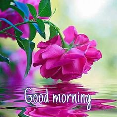Good morning sister have a nice day 💝💖💝 Good Morning Beautiful Pictures, Good Morning Images Flowers, Latest Good Morning Images, Good Morning Roses, Good Morning Cards, Good Morning Happy, Good Morning Picture, Morning Pictures, Morning Greetings Quotes